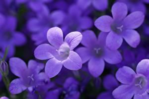 Tapety na pulpit Bokeh Fioletowy Dzwoneczki kwiat