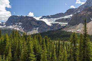 Hintergrundbilder Kanada Parks Gebirge Wald Banff Schnee Natur