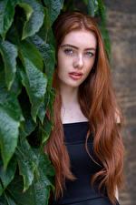 Bilder Rotschopf Haar Blattwerk Starren Emilia