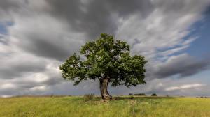Hintergrundbilder England Bäume Wolke Gras Hertfordshire Natur