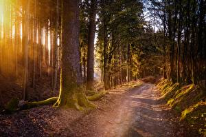 Pictures Forests Roads Moss Trees