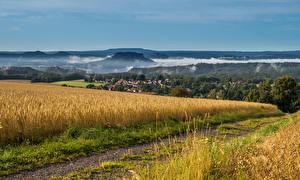 Sfondi desktop Germania Campo agricolo Mattino Foschia Saxony Natura