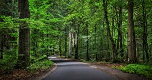 Bakgrunnsbilder Tyskland Skoger Veier Trær Natur