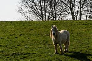 Tapety Konie Kuce Trawa Zwierzęta zdjęcia zdjęcie