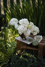 Image Hydrangea White Flowers