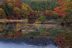 Wallpaper Japan Park Autumn Rivers Trees Fukushima