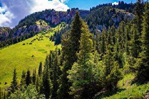 Hintergrundbilder Gebirge Felsen Bäume Naryn, Kyrgyzstan Natur