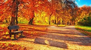 Images Parks Autumn Bench