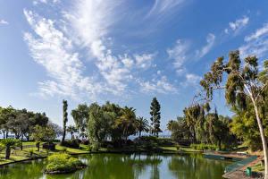 Fondos de escritorio Portugal Parques Estanque Valla árboles Santa Catarina Park in Funchal Madeira Naturaleza