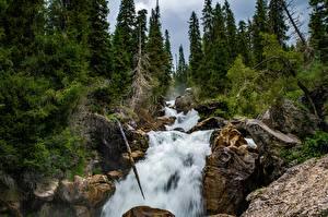 Bakgrunnsbilder Elver Elv Fosser Trær Klippe Kara-Kamysh, Kyrgyzstan
