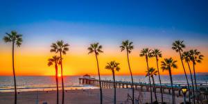 Photo USA Coast Sunrises and sunsets Pier Palm trees Beach Manhattan Beach Nature