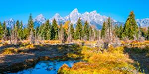 Bilder USA Parks Herbst Landschaftsfotografie Gebirge Bäume Grand Teton National Park Natur
