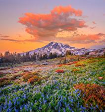 Wallpapers USA Parks Mountains Lupinus Scenery Washington Clouds Mount Rainier National Park Nature pictures images