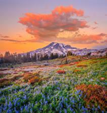 Bilder Vereinigte Staaten Park Gebirge Lupinen Landschaftsfotografie Washington Wolke Mount Rainier National Park Natur