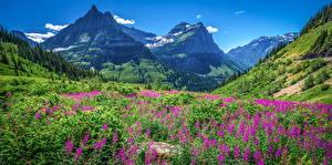 Hintergrundbilder Vereinigte Staaten Park Gebirge Landschaftsfotografie Glacier National Park, Montana Natur