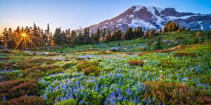 Bilder USA Park Berg Landschaftsfotografie Bäume Mount Rainier National Park Natur