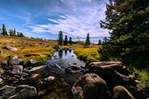 Sfondi desktop Stati uniti Pietre Ruscello Alberi Mammoth Creek Natura