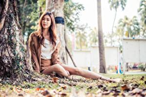 Bakgrundsbilder på skrivbordet Asiatisk Sitter Poserar Löv Bokeh Ser Unga_kvinnor