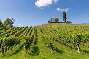 Fonds d'écran Autriche Maison Champ Vignoble Arbrisseau Kloch Nature images