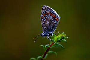 Tapety Motyle Owady Z bliska Zwierzęta zdjęcia zdjęcie
