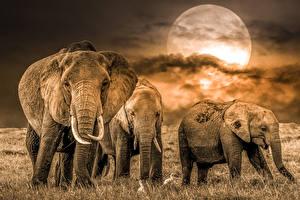 Photo Elephant Moon animal