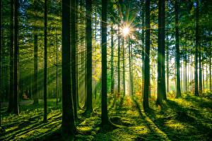 Bakgrunnsbilder Tyskland Skoger Trær Lysstråler Schwarzwald Natur