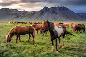 Bakgrunnsbilder Island Fjell Hest  Natur