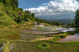 Tapety na pulpit Indonezja Pole rolnicze Wodzie Sulawesi