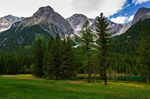 Fonds d'écran Italie Montagne Alpes Arbres Nuage Trentino-Alto Adige