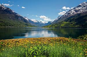 壁紙,挪威,山,夏季,蒲公英,峡湾,Nordfjord,大自然,