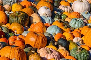 Fotos Kürbisse Viel Mehrfarbige Lebensmittel
