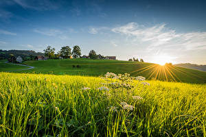 Bilder Schweiz En åker Hus Soluppgångar och solnedgångar Ljusstrålar Linner Linde Natur bilder