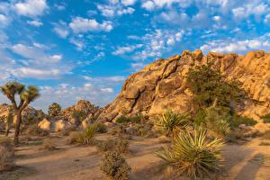 Sfondi desktop Stati uniti Parco California Sabbia Joshua Tree National Park Natura