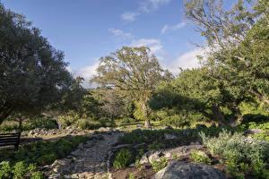 Papéis de parede EUA Parque árvores Trilha Prehistoric Garden Oregon Naturaleza imagens